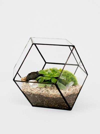 极具创意的多肉植物玻璃花房