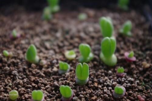 萌 留住种子,播种希望,收获健康