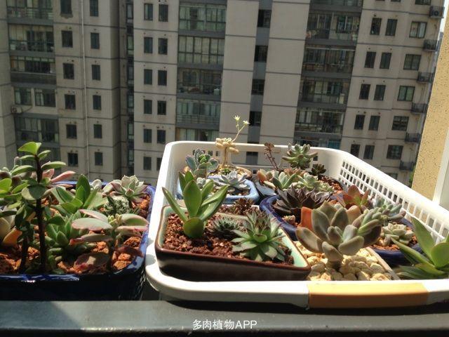 高层阳台窗外花架加效果图