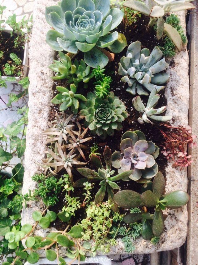 石槽水养植物盆栽