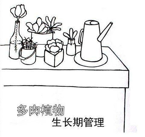 [表情109]多肉植物生长期管理[表情109]图片