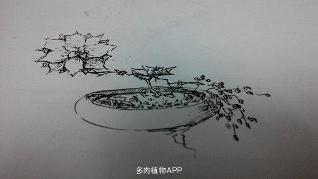 手绘线稿盆植物