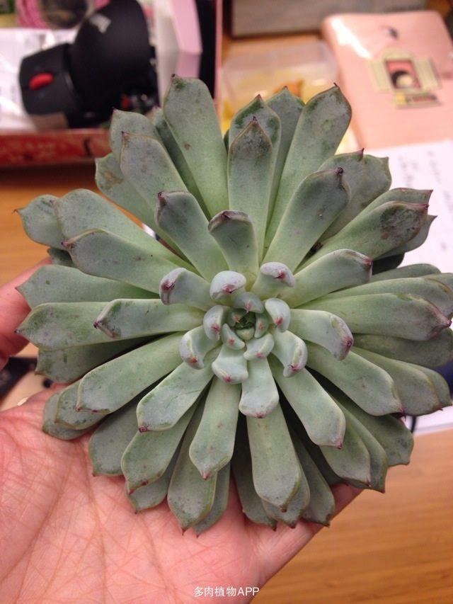 双子植物根次生结构图片