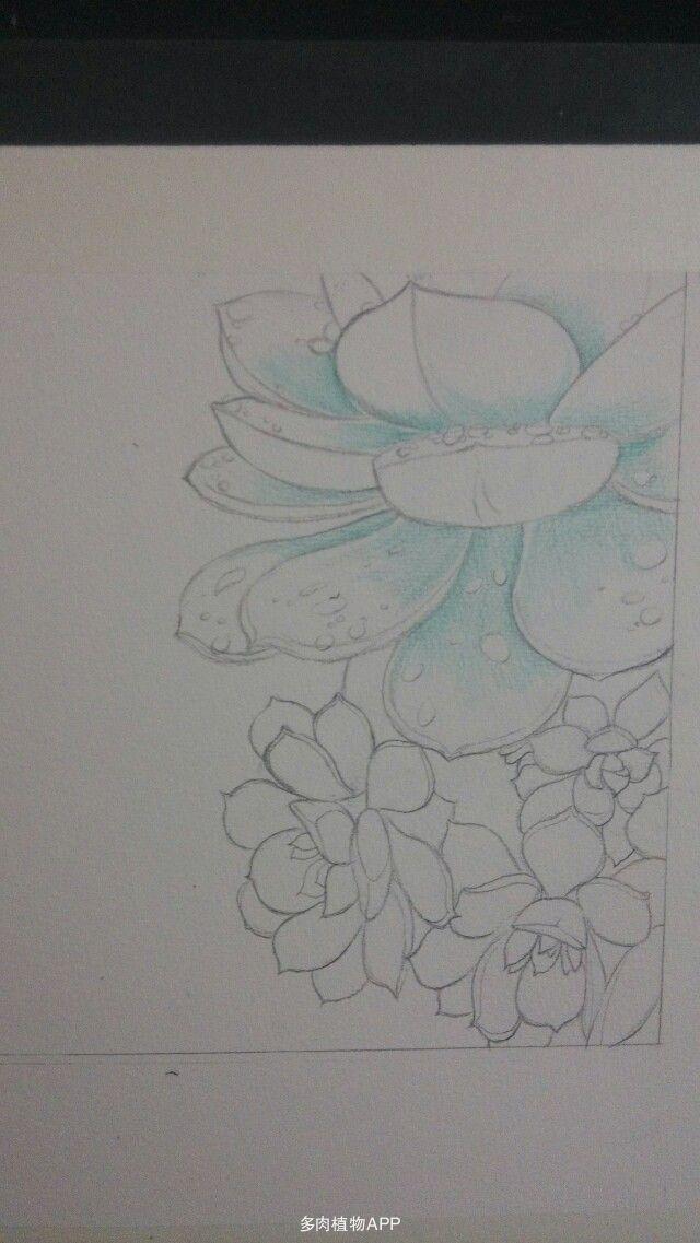 新手手绘植物简单线稿