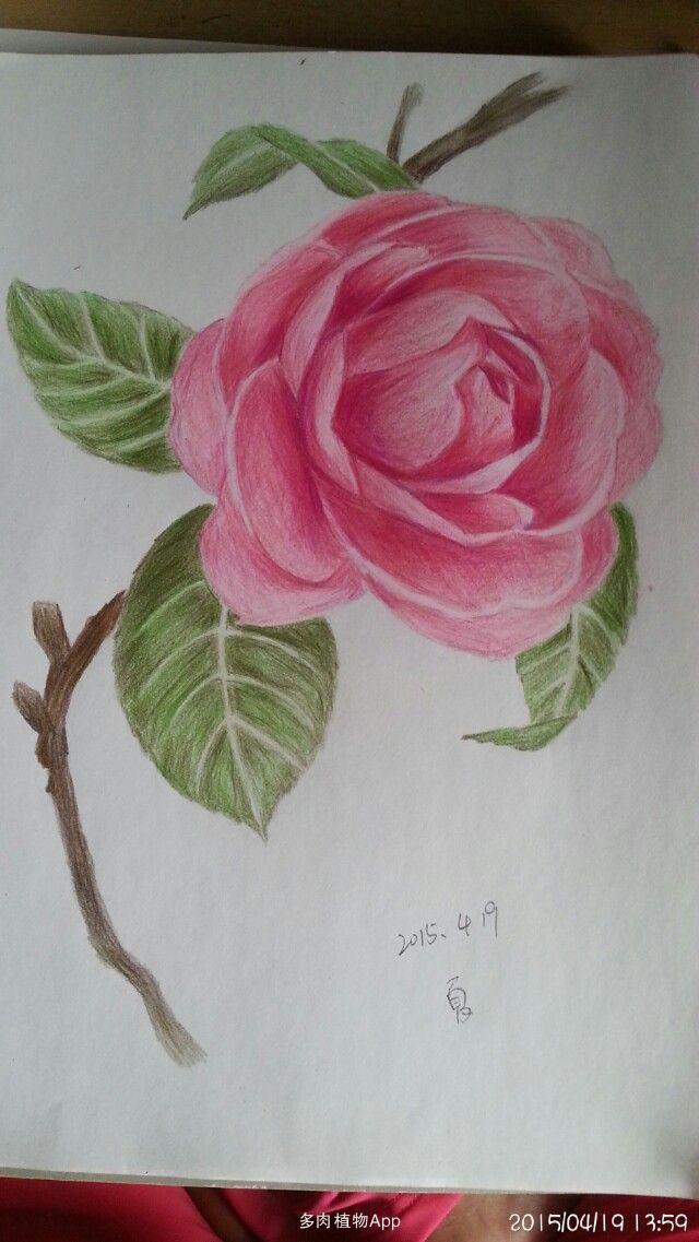 植物彩铅图片步骤图片
