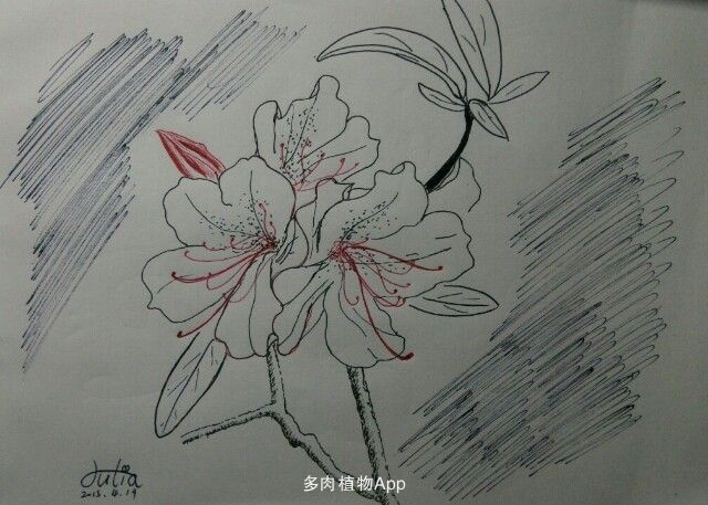 简笔画 手绘 线稿 640_457