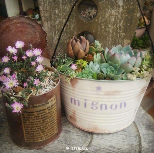 ins植物图片素材