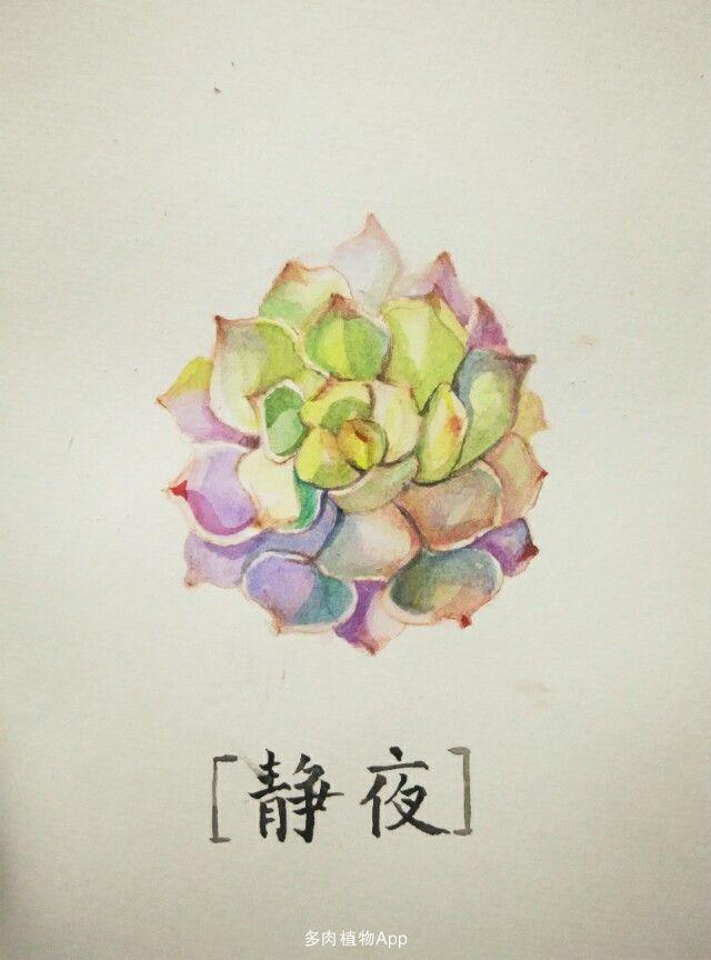 多肉植物 水彩画