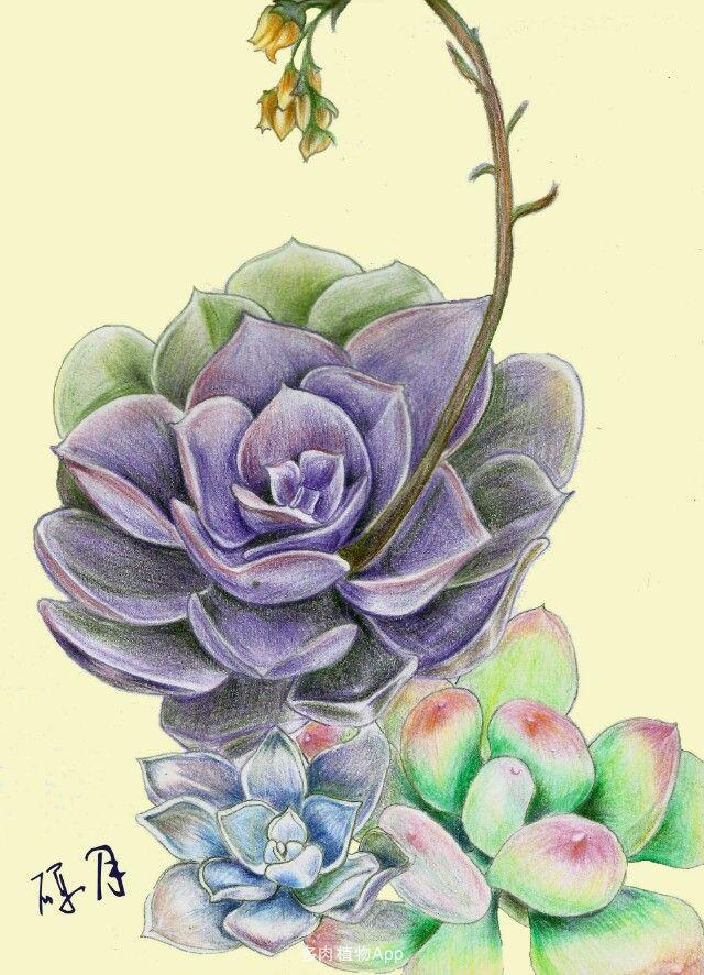 彩铅紫珍珠,兜.