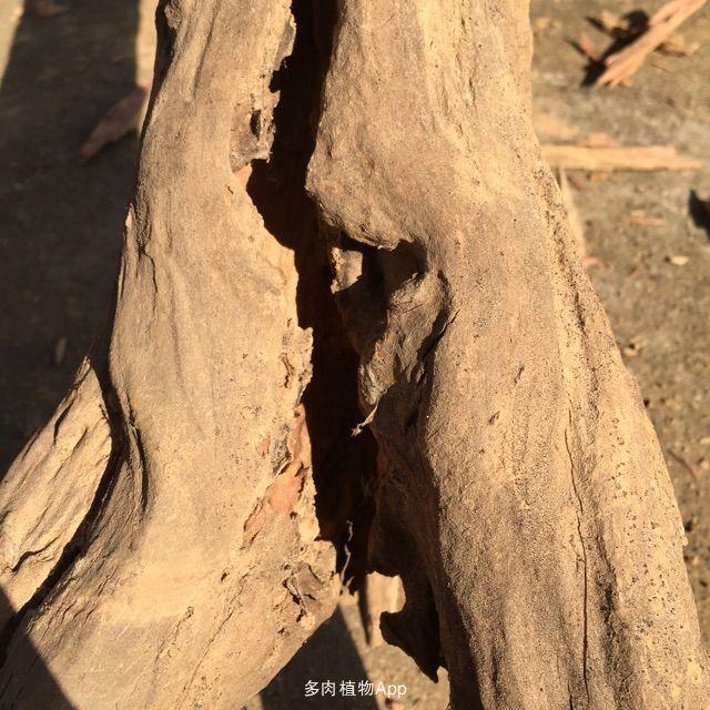 朽木不可雕也?非也!