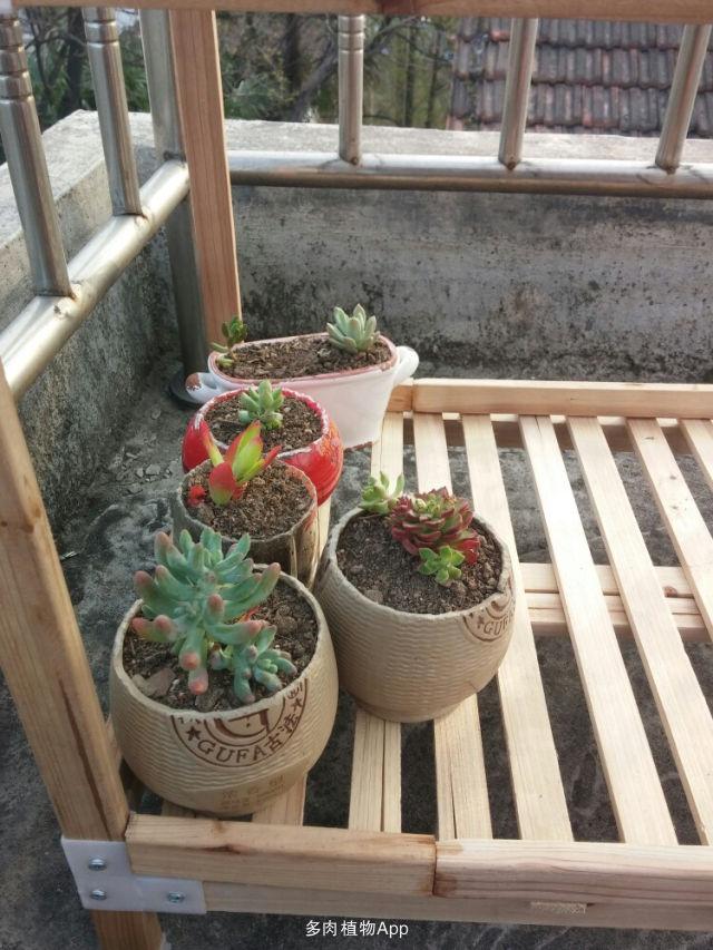 自制图纸,会审下技术宅男的花架工程园林绿化实力展示常见问题图片