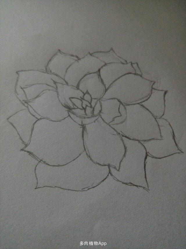 植物素描画步骤