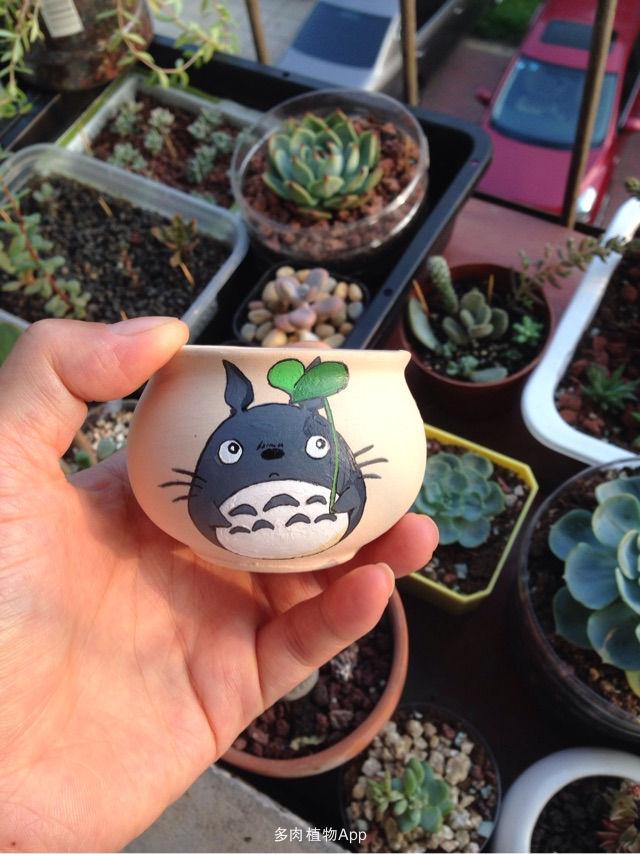 买了几个素陶的拇指盆,好小,画上只q版龙猫,立刻可爱了不少.