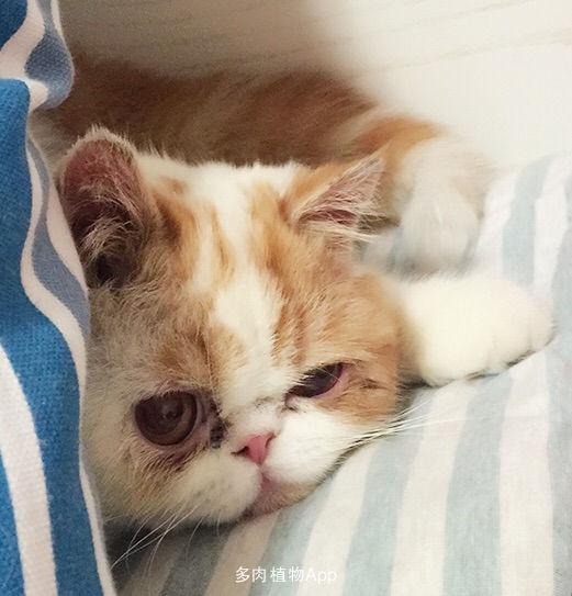 壁纸 动物 狗 狗狗 猫 猫咪 小猫 桌面 521_543