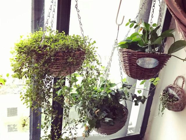 身居闹市,总想回归自然。奈何又不能像别人那样,上有天下有地,可以屋前种花,屋后栽树。只能凭借三尺小阳台,玩个立体小花园。种上自己喜欢的花花草草,种种自己的希望!来个自娱自乐。平日浇浇水除除虫,那花木长势喜人,该长叶的长叶了,该开花的开花了,让邻居羡慕不已!