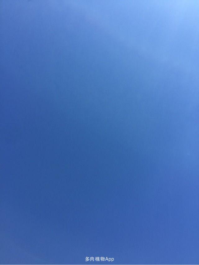 哈哈,这是纯背景板哦……干净的蓝色,灿烂的阳光,舒适的周末,怎么能