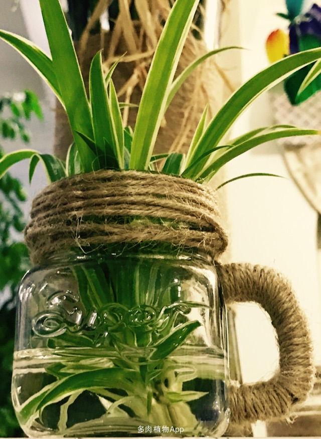 废物利用!diy 花瓶