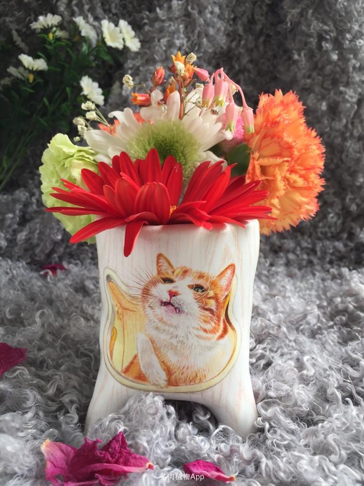 手绘花盆照片写实版《橘猫》